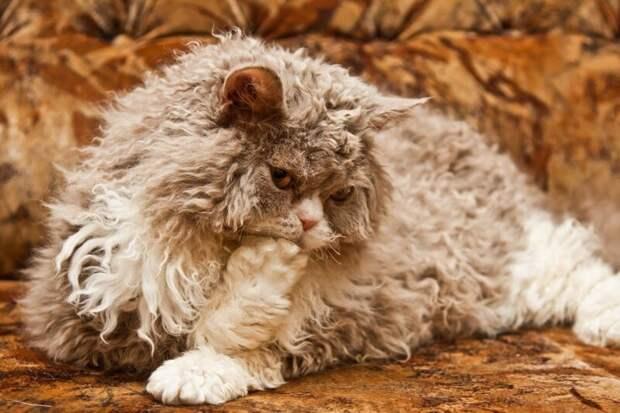 11. Кошка не ложится спать в бигуди. жены, интересное, кошки, юмор