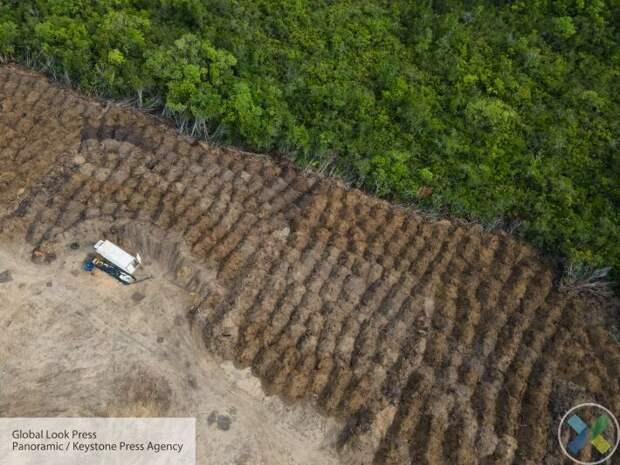 В Украине планируют снять мораторий на экспорт леса