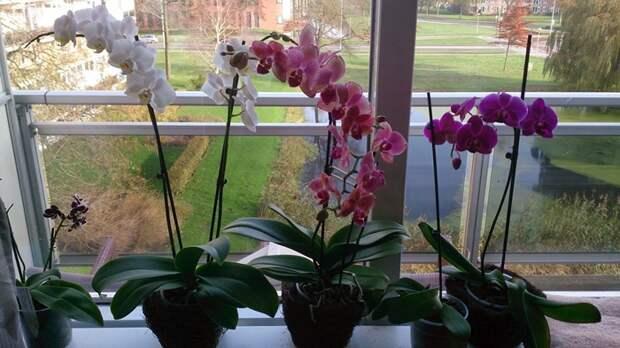 9 правил, чтобы орхидея цвела круглый год