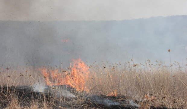 В Башкирии предупредили о повышении пожароопасности в лесах