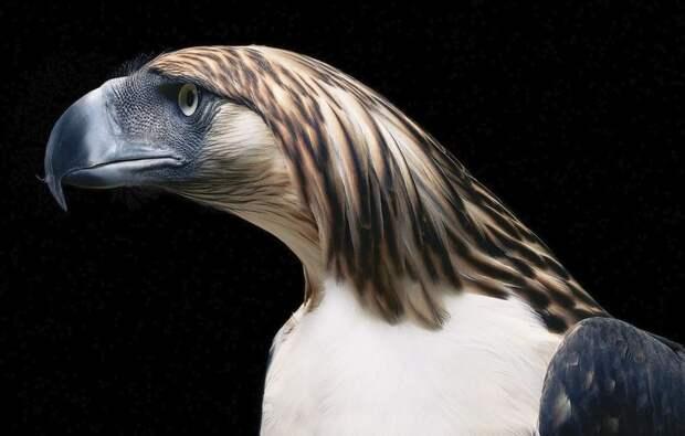 Необыкновенные портреты редких и исчезающих птиц от Тима Флэка