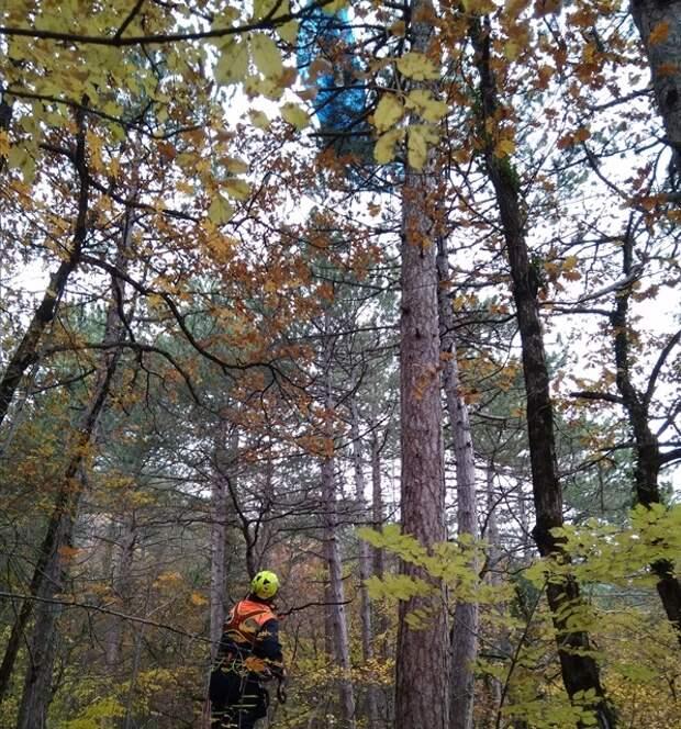 В Крыму парапланерист застрял на дереве в 25 метрах от земли