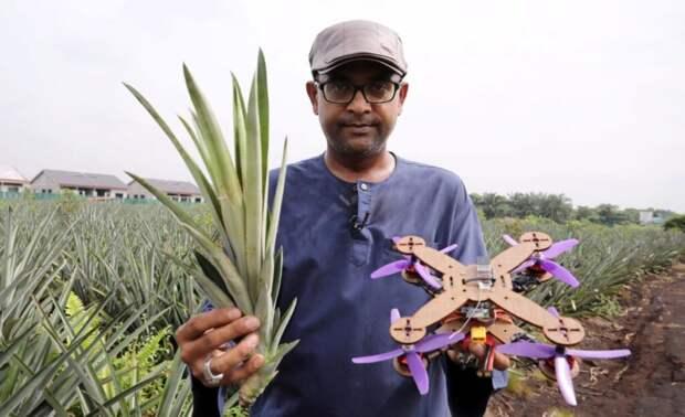 В Малайзии планируют производить дроны из ананасовых листьев