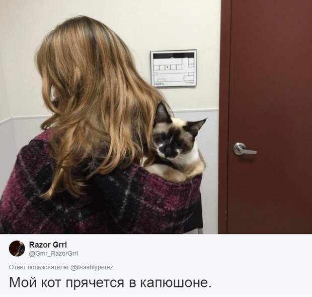 кот в капюшоне хозяйки