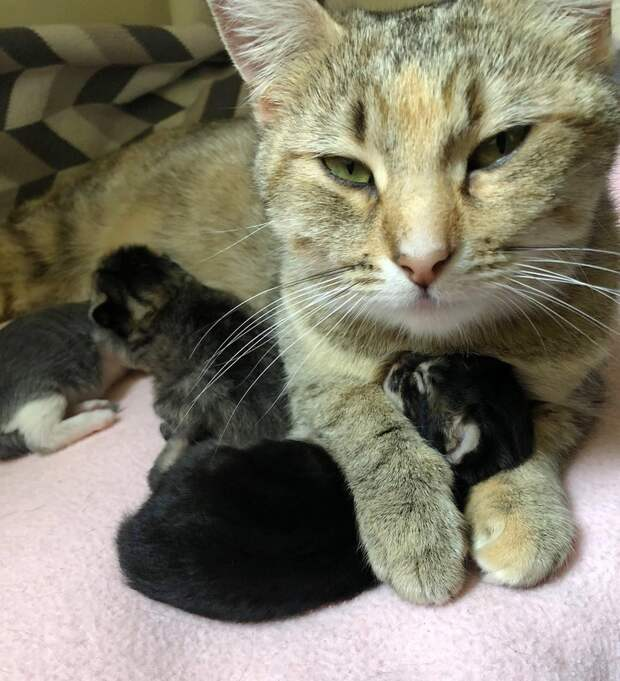 кошка и трое котят