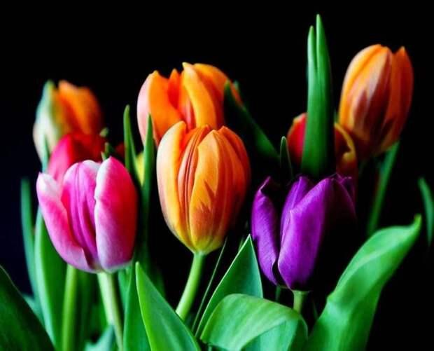 Жительницам Москвы подарят тюльпаны в честь праздника 8 марта