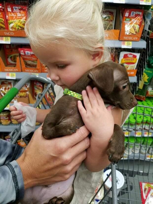 Лапку-веточку он не сможет подать хозяину… Но зато этот пёс спасает его от слёз и страшной болезни!