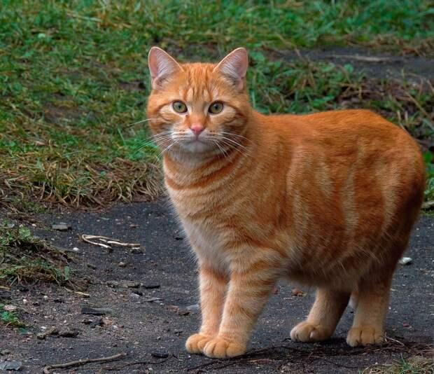 Так ли уж кошка гуляет сама по себе