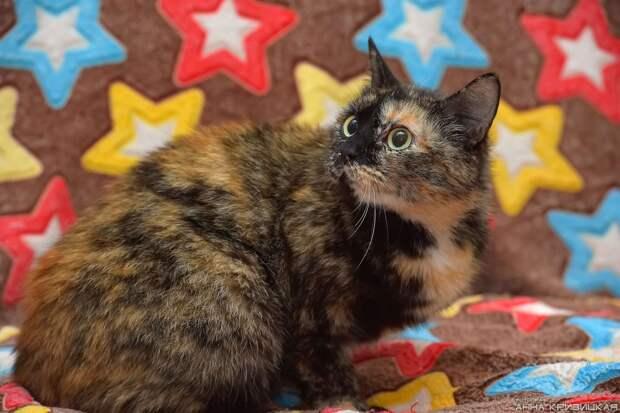 Ищет дом самая ласковая кошка, не мыслящая своей жизни без людей!!!