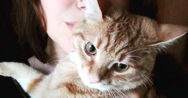 Маму котёнка убили злые люди… Но осиротевшему малышу судьба приготовила подарок!
