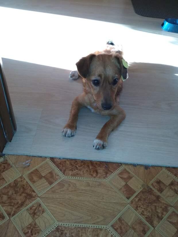 В ухе истощённого пса болталась бирка, а в глазах читалась грусть. Его хозяин умер, а его выгнали из дома
