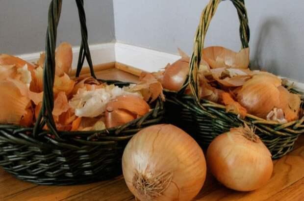Собирайте золотисто-коричневую шелуху, чтобы удобрять растения / Фото: moyasotka.com