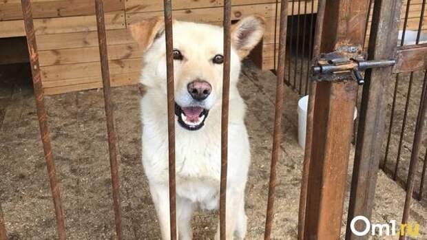 Неадекватные посетители омского приюта для животных разбили дверь