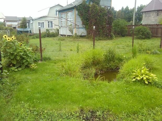Как и зачем мы сделали газон на даче