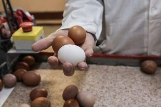 Будет ли в России дефицит яиц?