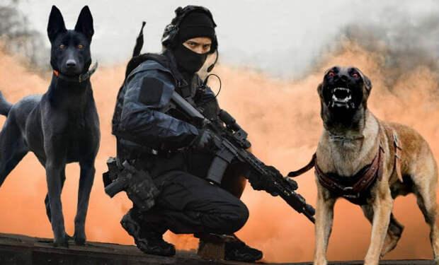 5 пород собак словно созданных для спецназа