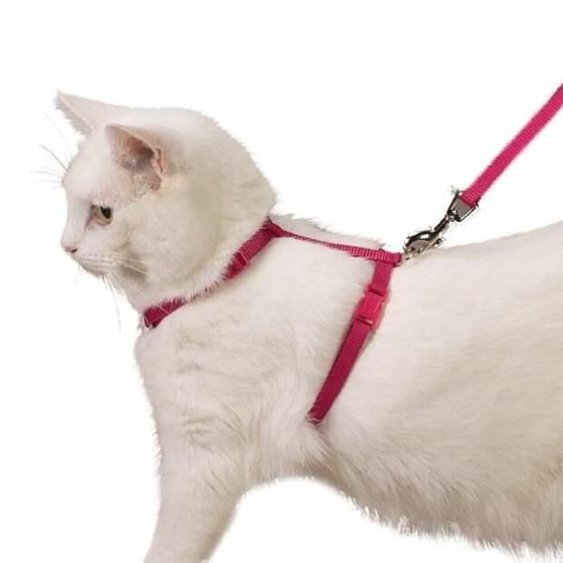 Шлейки предлагаемые для кошек зоомагазинами с тонкими ремнями и мелкими замками.