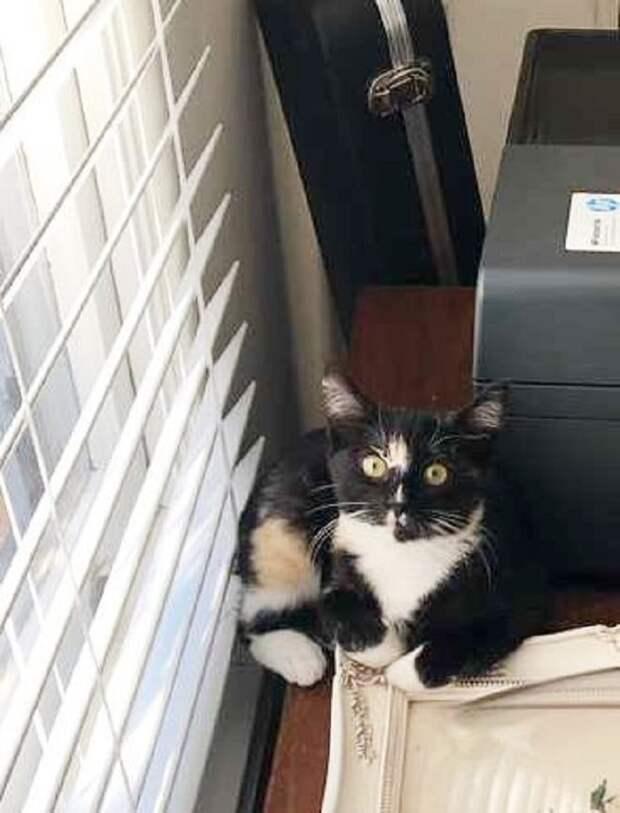 Котенок возле подноса