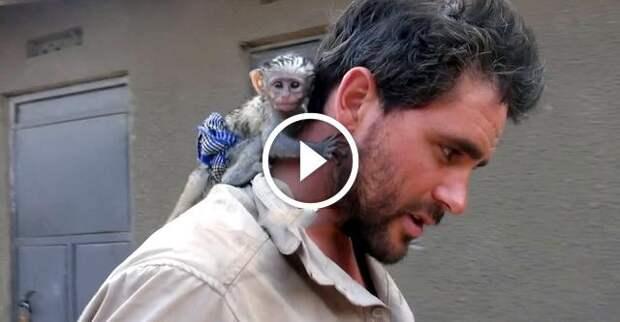 Спасение маленькой обезьянки