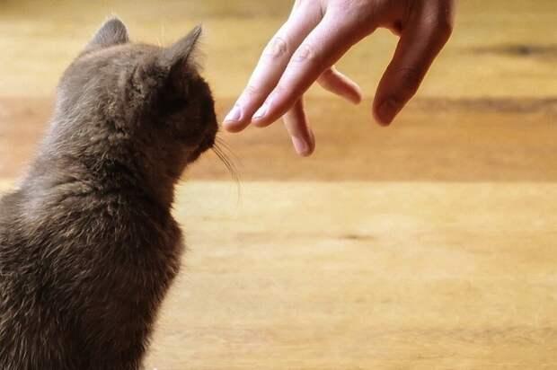 Мать притащила домой котёнка, чтобы порадовать детей. Показалось, что котик нужен был только ей