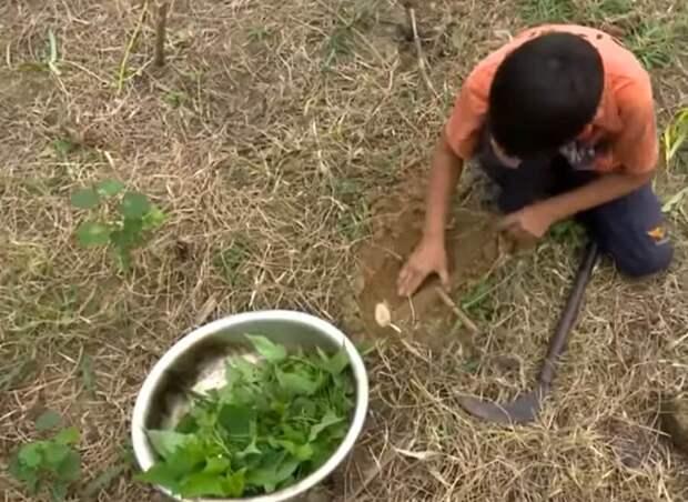Десятилетний сирота живет один и ведет хозяйство