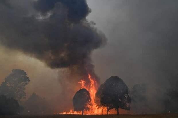 Пожары в Австралии продолжаются. Несмотря на опасность, семья спасает каждое животное, которое нуждается в помощи