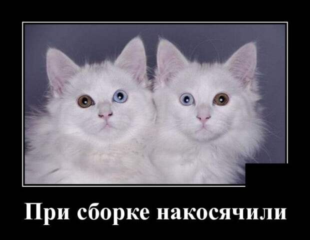 Демотиватор про котиков