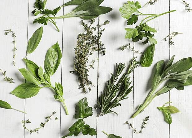 10 растений, которые избавят тебя от осенней хандры