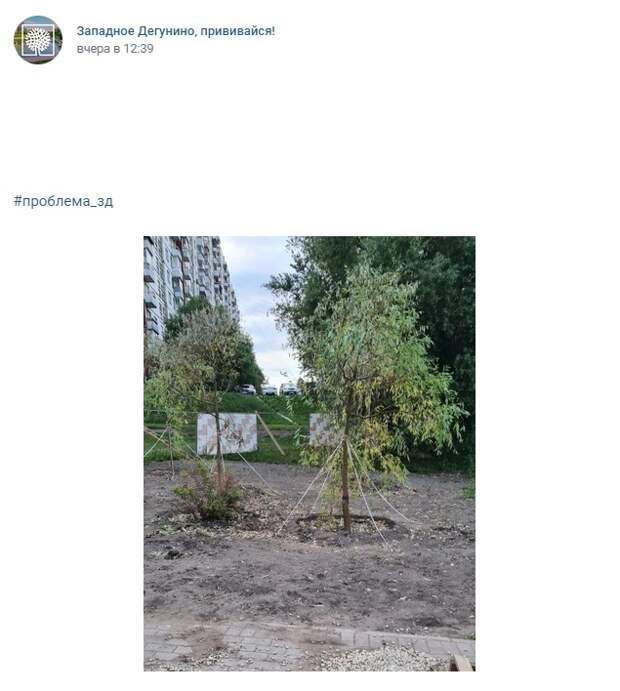 Деревья на территории Дегунинского пруда будут поливать лучше