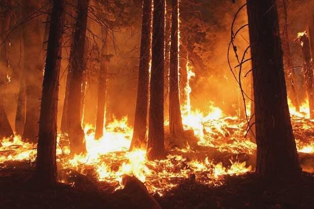 Из-за непотушенного мангала в Феодосии сгорела часть леса