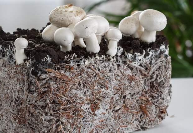 Мицелий - главный строительный материал, а белые волокна - подземная часть гриба / Фото: hitecher.com