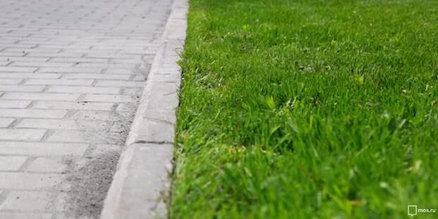 На Тайнинской спасли вытоптанный газон – «Жилищник»