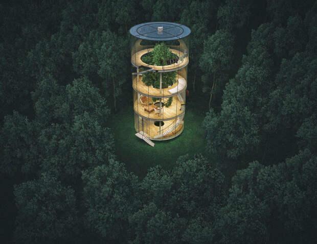 Cтеклянный дом построенный вокруг дерева в лесу