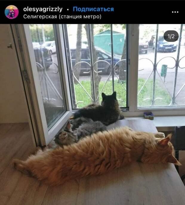 Фото дня: лежбище котов на Селигерской
