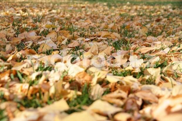 Ветер до 16 метров в секунду ожидается в Уральске