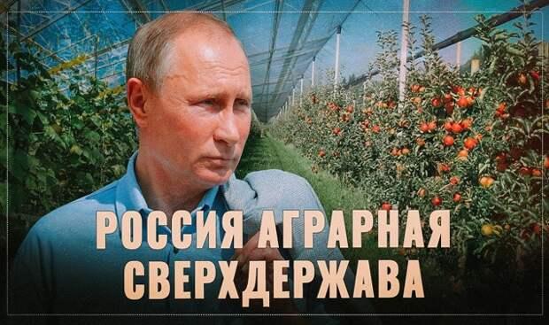 Производство масла и сахара в России рухнуло после заморозки цен