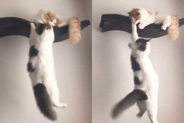Коты повторили культовую сцену из «Короля Льва» и покорили интернет