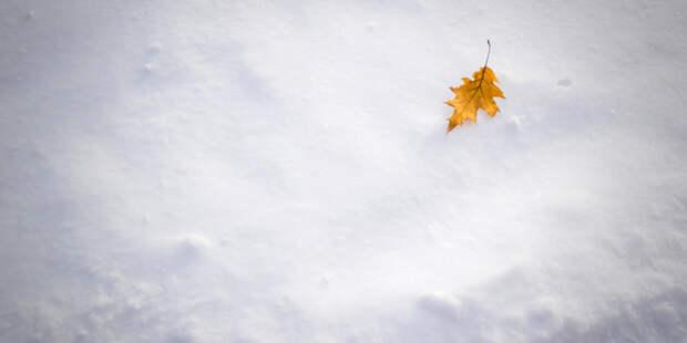 Названы основные способы использовать осеннюю листву на даче