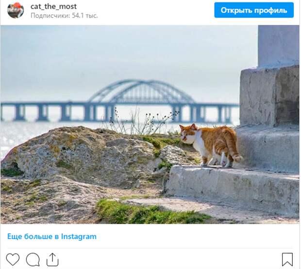 Символ Крымского моста кот Мостик нашел новую работу и переезжает