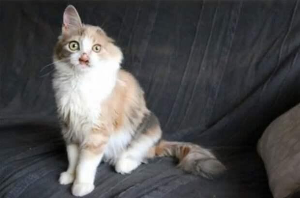 """Люди назвали кошку """"Гюлюмсер"""", что означает """"та, которая всегда смеется"""" животные, кошки, стамбул"""