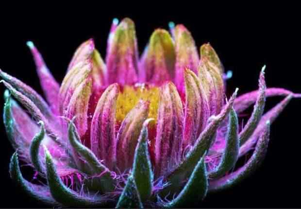18 раз, когда кто-то сфоткал невидимое сияние цветов