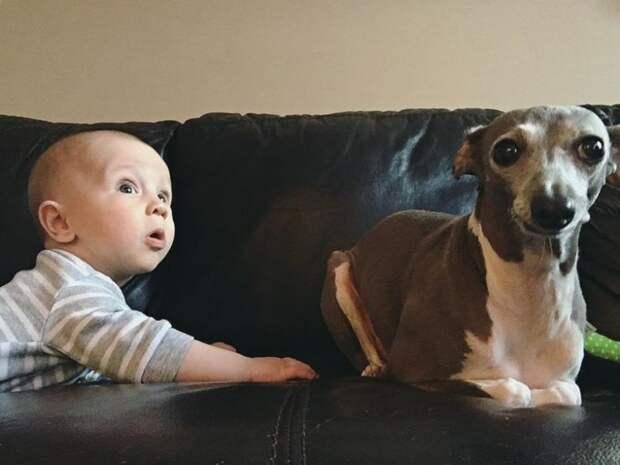 Собака боялась всего, пока в семье не появился ребенок