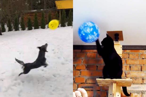 Топ-5 видео с довольными кошками и собаками, играющими с воздушным шариком