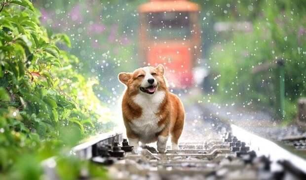Не по-летнему прохладный и дождливый понедельник ждет жителей Ростовской области