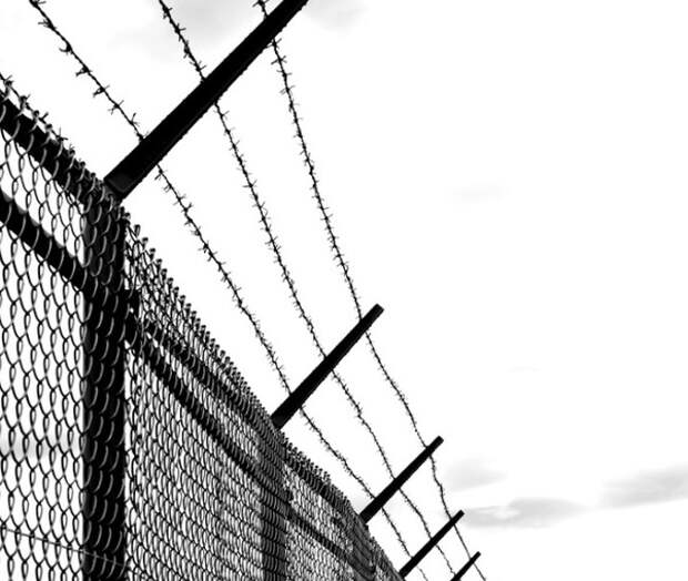 Власти Польши приняли решение построить забор высотой 2,5 метра на границе с Беларусью