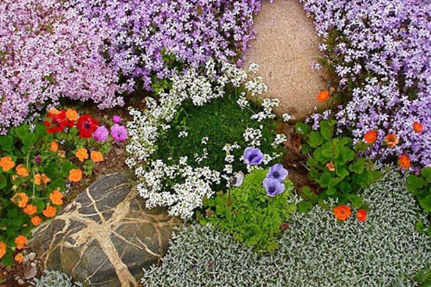 виды почвопокровных растений