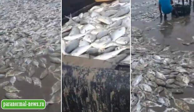 Еще одно плохое предзнаменование - тысячи рыб выбросились на берег Акапулько