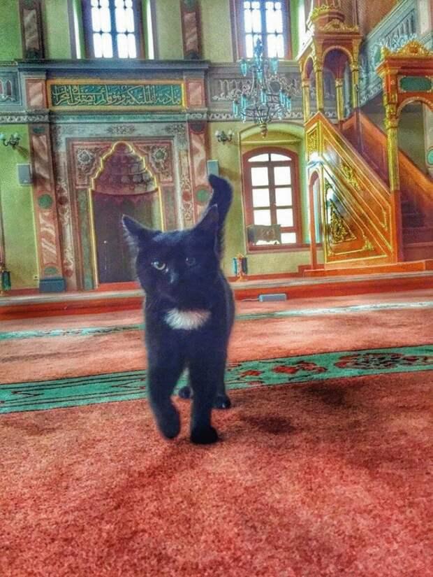 Турецкий имам впускает бездомных кошек в мечеть, чтобы они могли согреться