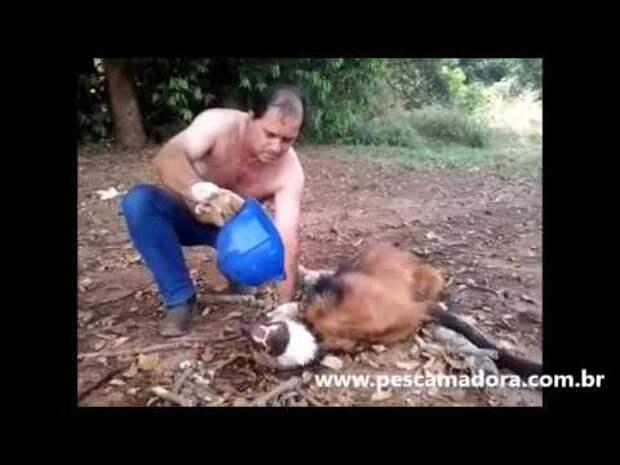 Обессиленный волк лежал на обочине, этот мужчина не побоялся подойти и спас жищнику жизнь