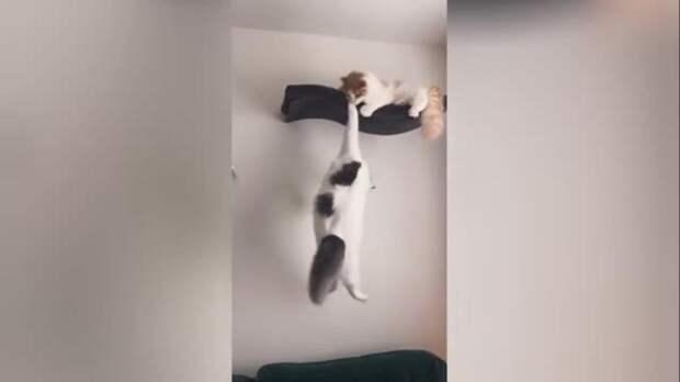"""Культовая сцена из """"Короля Льва"""" в исполнении котов покорила Интернет"""